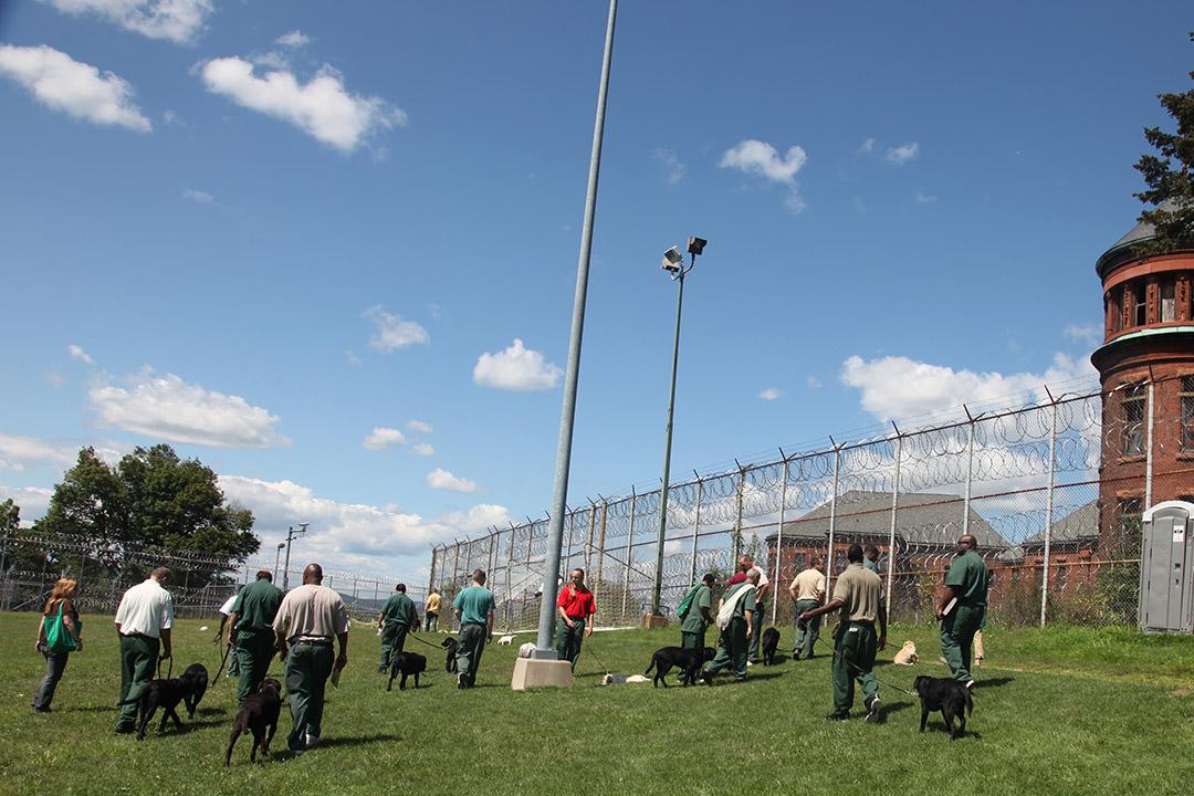 Prison Dogs Yard